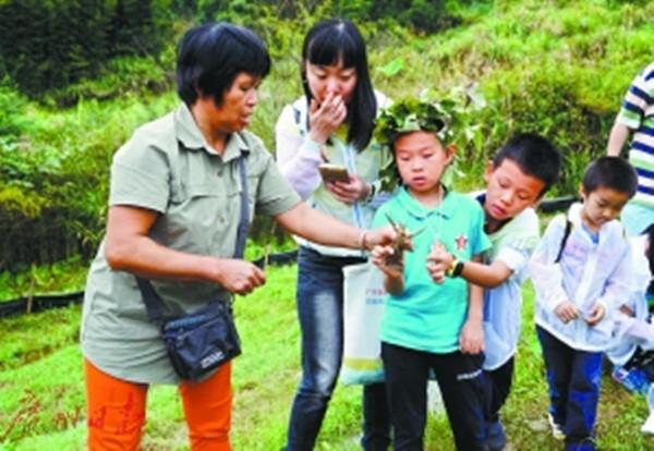 从化良口镇乐明村乡村自然导赏员带领市民领略不一样的生态农村 稻田养龙虾 除草又松土